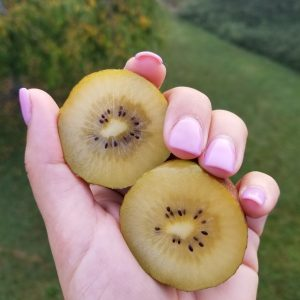 Person holding kiwi in their hand.